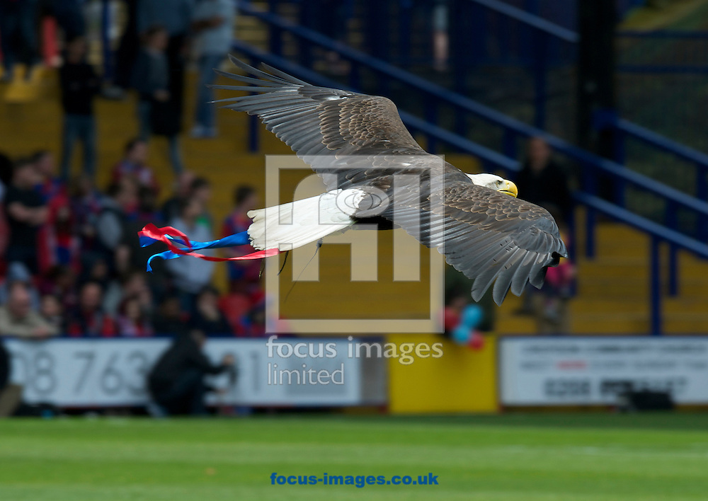 Picture by Alan Stanford/Focus Images Ltd +44 7915 056117.04/05/2013.The eagle flies beforethe npower Championship match at Selhurst Park, London...