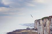 Alabasterküste bei Etretat, Normandie, frankreich
