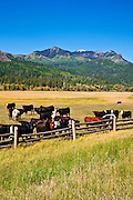 Cattle ranch on the San Juan River, San Juan National Forest, Colorado