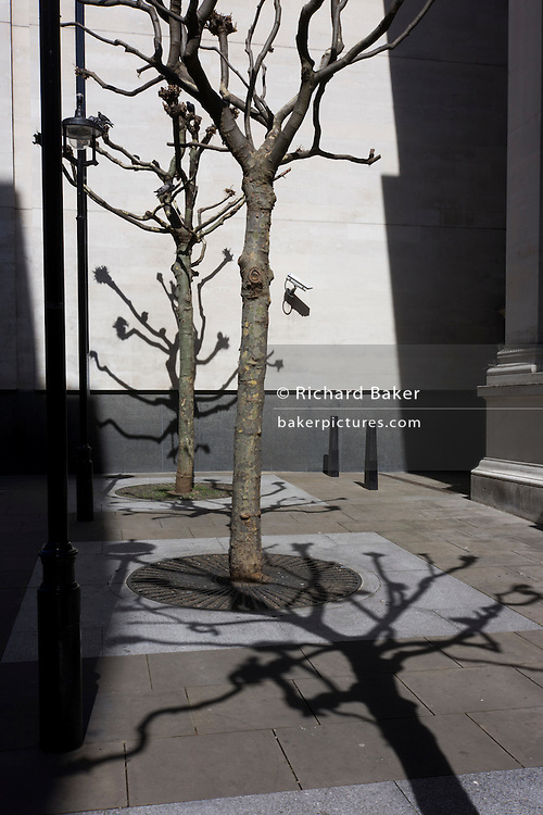 Shadows of bare branched trees on pavement and white wall behind National Portrait Gallery.