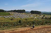 Kenya, Kericho county, Kericho, village des travailleurs du thé // Kenya, Kericho county, Kericho, tea picker village
