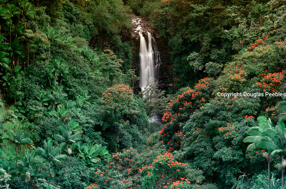 Rainforest, Waterfall, Hamakua Coast, Island of Hawaii, Hawaii, USA<br />
