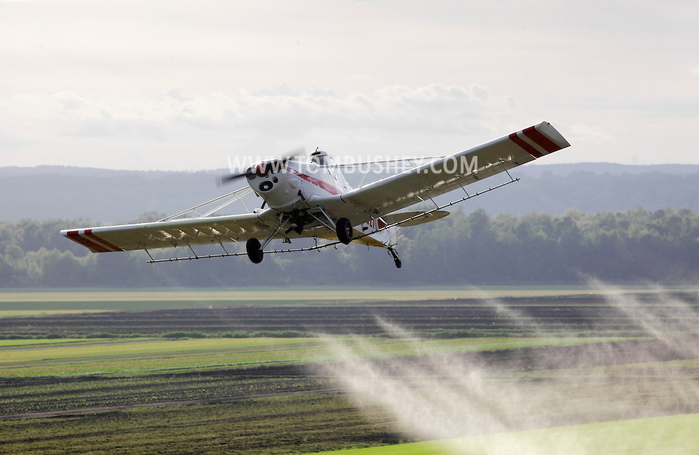 Goshen, New York - A crop duster sprays herbicide while flying over black dirt fields planted with onions on May 21, 2011. The herbicide kills the barley, which was planted with onions in the field to shield the onions from the wind.