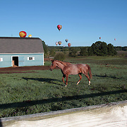 Horses watch the passing balloons during practice day for the World Hot Air Ballooning Championships in Battle Creek, Michigan, USA. 17th August 2012. Photo Tim Clayton