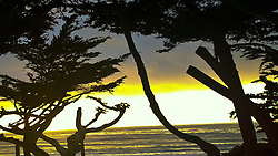 Cypress Trees and Sunset over Pacific Ocean