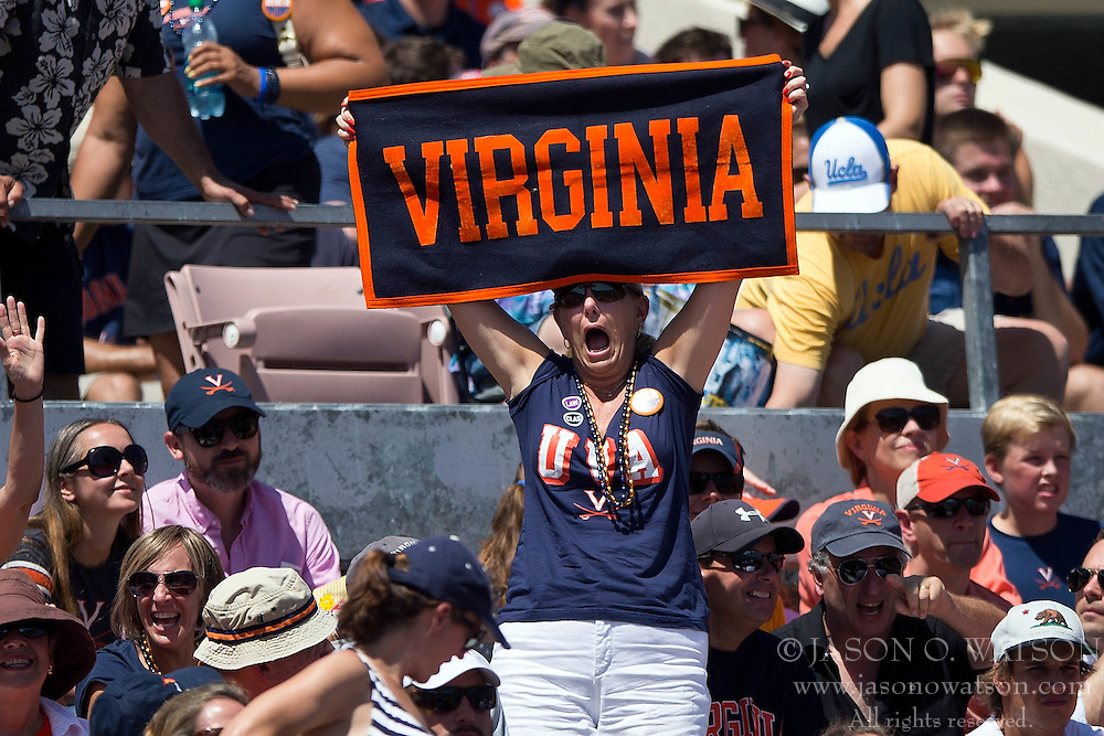 PASADENA, CA - SEPTEMBER 05:  A Virginia Cavaliers fan cheers during the second quarter against the UCLA Bruins at the Rose Bowl on September 5, 2015 in Pasadena, California. The UCLA Bruins defeated the Virginia Cavaliers 34-16. (Photo by Jason O. Watson/Getty Images) *** Local Caption ***