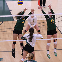 3rd year middle Kathleen Bruce (8) of the Regina Cougars in action during Women's Volleyball home game on November 19 at Centre for Kinesiology, Health and Sport. Credit: Arthur Ward/Arthur Images