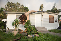 September 11, 2017 - Dania Beach, Florida, U.S - A mobile home in Dania Beach is damaged by a tree  struck down by the strong winds of Hurricane Irma. (Credit Image: © Orit Ben-Ezzer via ZUMA Wire)