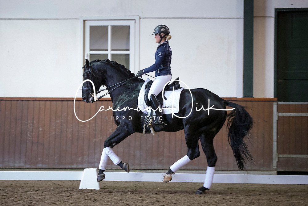 Jan Brink (SWE)<br /> Global Dressage Forum<br /> Academy Bartels - Hooge Mierden 2013<br /> &Acirc;&copy; Dirk Caremans
