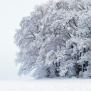 Frozen tree branches in the snow against a light blue sky
