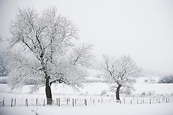 © Licensed to London News Pictures. 15/01/2013..Roseberry Topping, England..Further snow showers fall on East Cleveland and North Yorkshire. Pictures id the area of Roseberry Topping in North Yorkshire..Photo credit : Ian Forsyth/LNP
