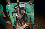 Dead animals confiscated from the buyers of poached meat who attempted to travel after dusk in order to evade the bushmeat patrol.  The meat included smoked monkeys and a baby gorrila head, a highly endangered and protected specie.