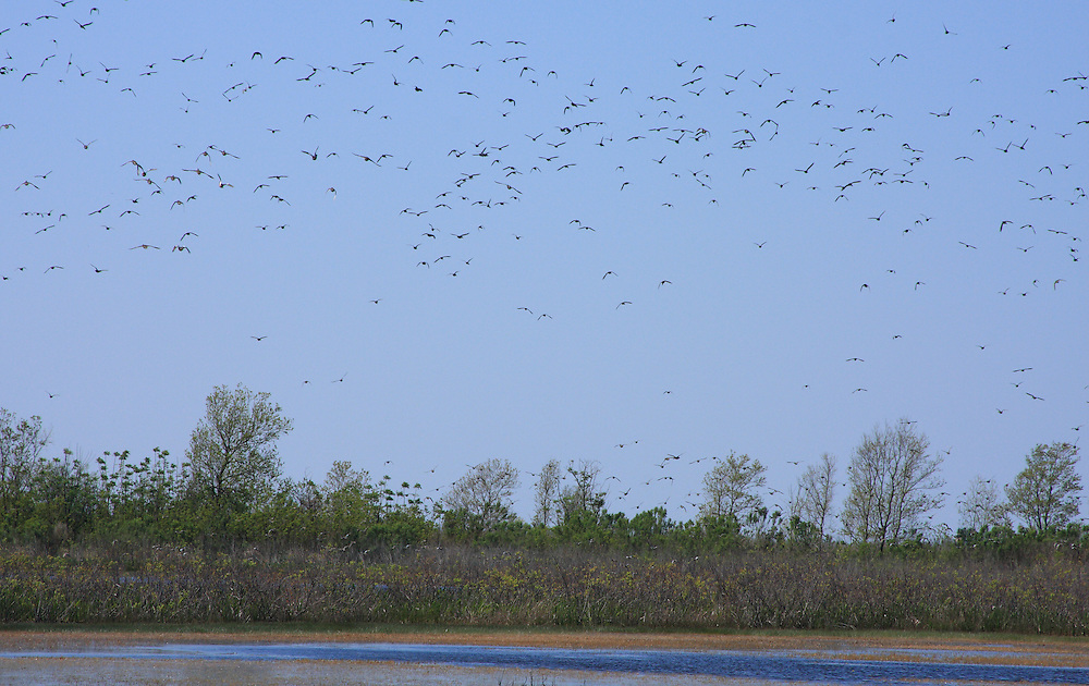 White Lake Wetlands Conservation Area, Vermilion Parish Louisiana