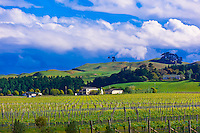 Vineyards near the Elephant Hill Estate and Winery, Te Awanga coast, near Napier, Hawkes Bay, north island, New Zealand