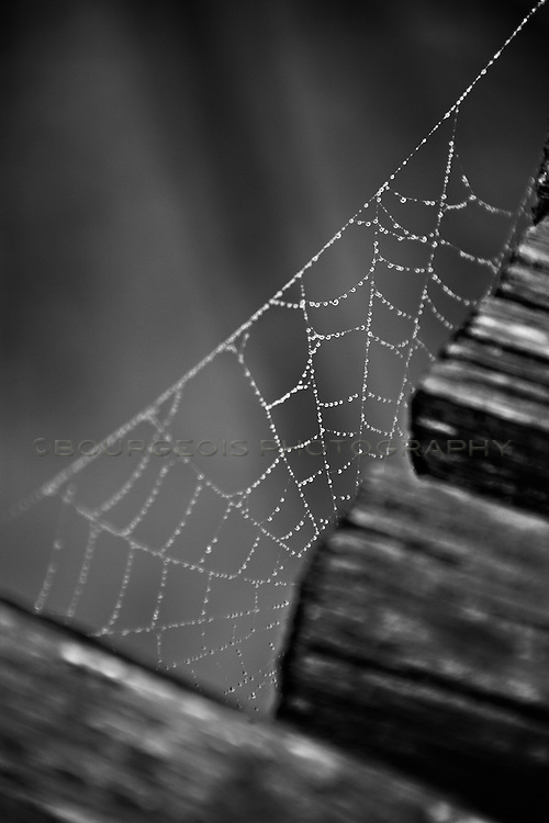 tiny water droplets on a large spider web