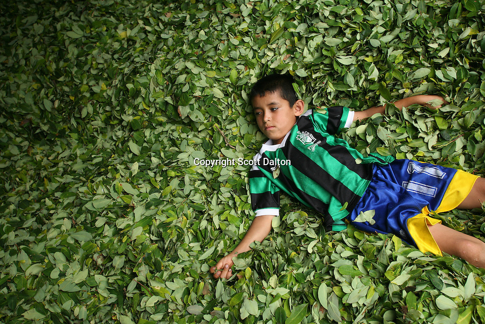 A young boy lays in a bed of coca leaves at a lab where the leaves will be processed into coca paste, in a remote area of the southern Colombian state of Nariño, on Monday, June 25, 2007. Although government efforts to eradicate coca have reached many parts of Colombia, still the coca business thrives. (Photo/Scott Dalton)