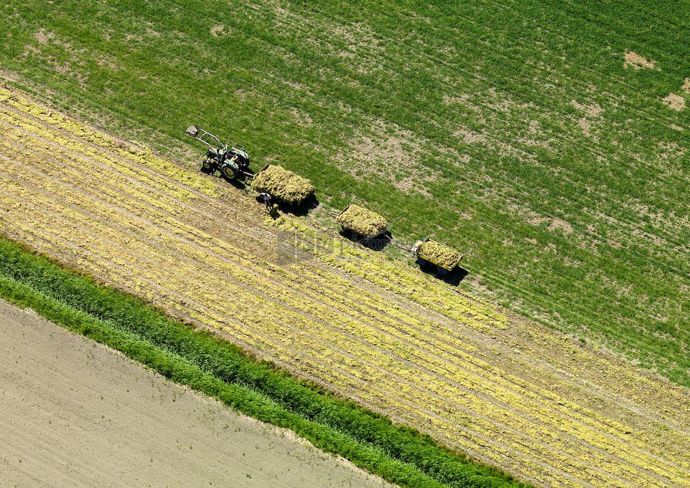 20110601 0051 Gras wordt met de hand geladen op 3 wagens