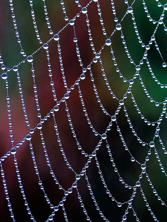 Spider web and dew, Hand Cove area, Baxter County, Arkansas