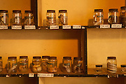 Preserved specimens in glass jars in part of the education center at the Chiangali Wildlife Orphanage in Bulawayo, Zimbabwe. © Michael Durham / www.DurmPhoto.com