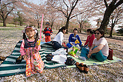 Bulguksa Temple, declared World Cultural Heritage in 1995. Family picknick under cherry trees in full bloom.