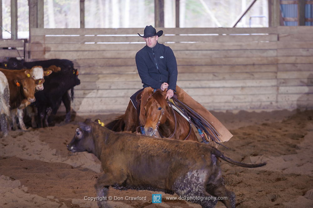 April 30 2017 - Minshall Farm Cutting 2, held at Minshall Farms, Hillsburgh Ontario. The event was put on by the Ontario Cutting Horse Association. Riding in the 25,000 Novice Horse Non-Pro Class is Jason Gorringe on Top Gun Memorial owned by the rider.