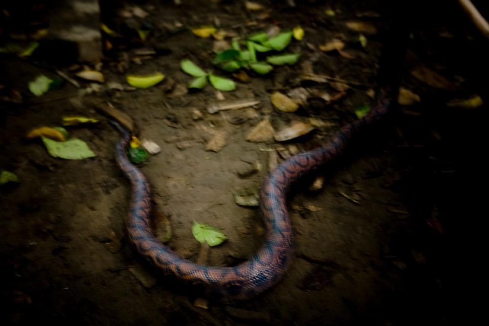 SERPIENTE EN LOS BOSQUES DEL AMAZONAS