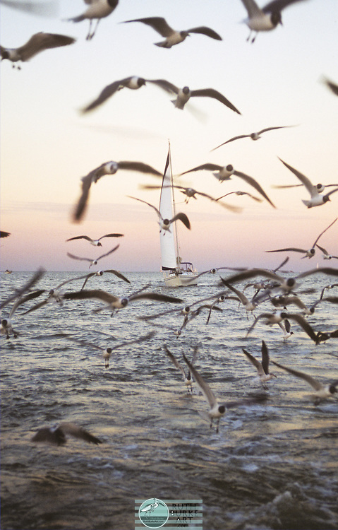 Birds With Sailboat