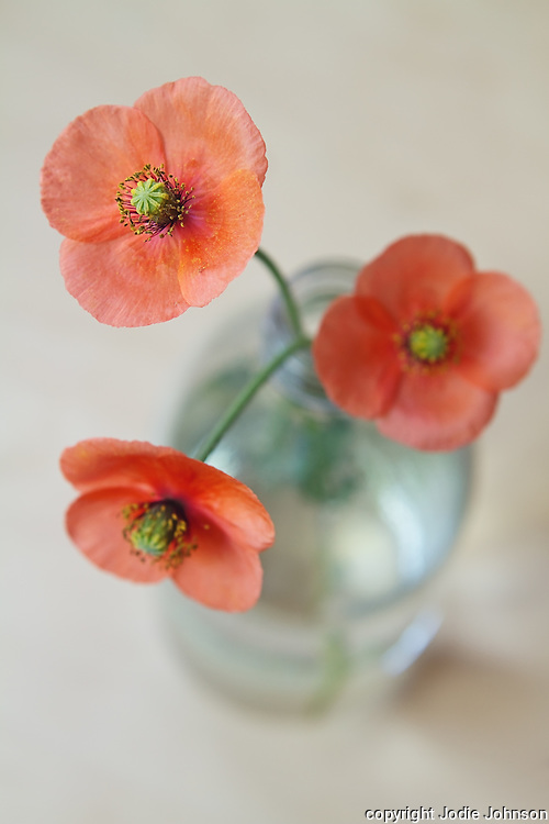 Close up overhead view of three red poppies in a glass bottle