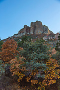 Autumn leaves, Big Bend National Park, Texas, on Lost Mine Trail, looking up at Casa Grande.
