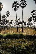Palm trees near the Gulf of Thailand. Eastern & Oriental Train