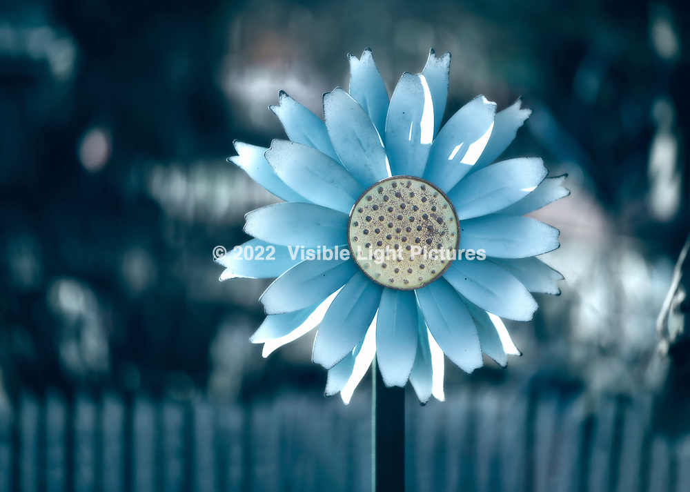 blue metal daisy pinwheel in a garden