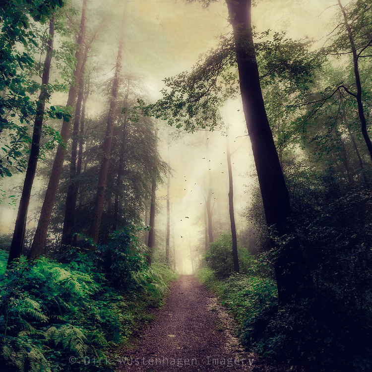 Forest path through a dreamy forest on a summer morning - textured photograph<br />