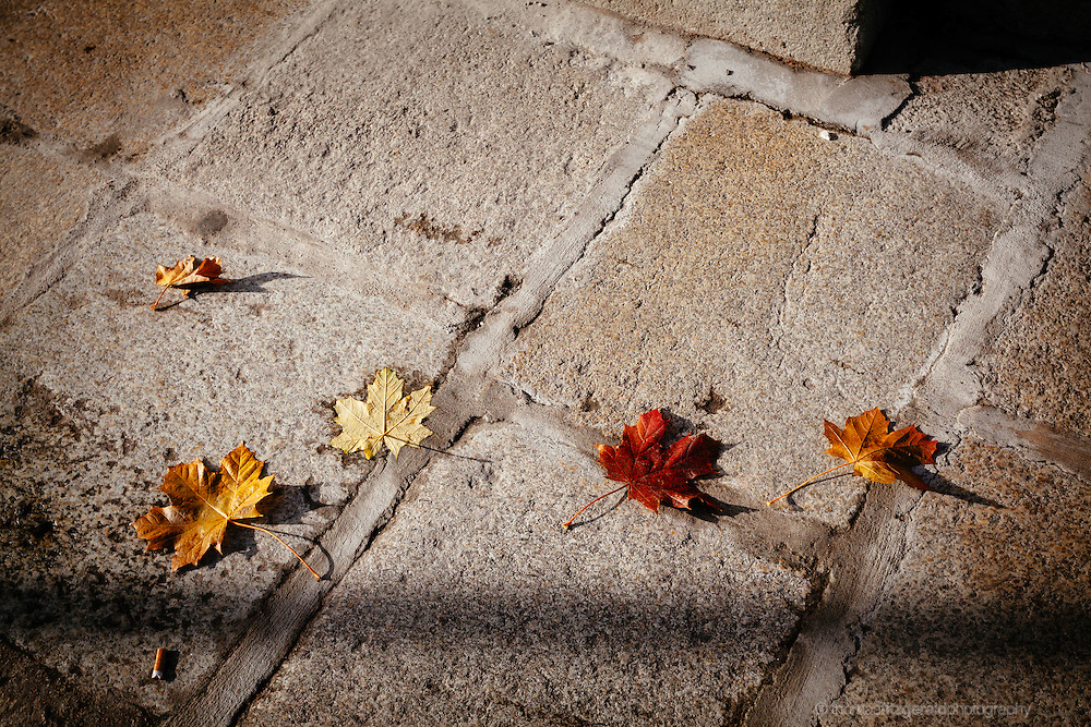 Autumn, Ireland: A Line of fallen leaves on the pavement, with multiciloured leaves contrasting against the stone paving
