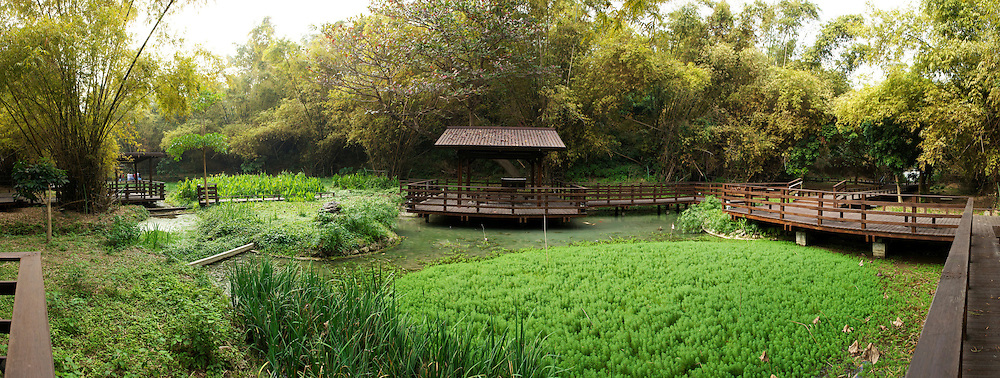 A small pond in a bamboo forest on Little Liuqiu Island, Taiwan.