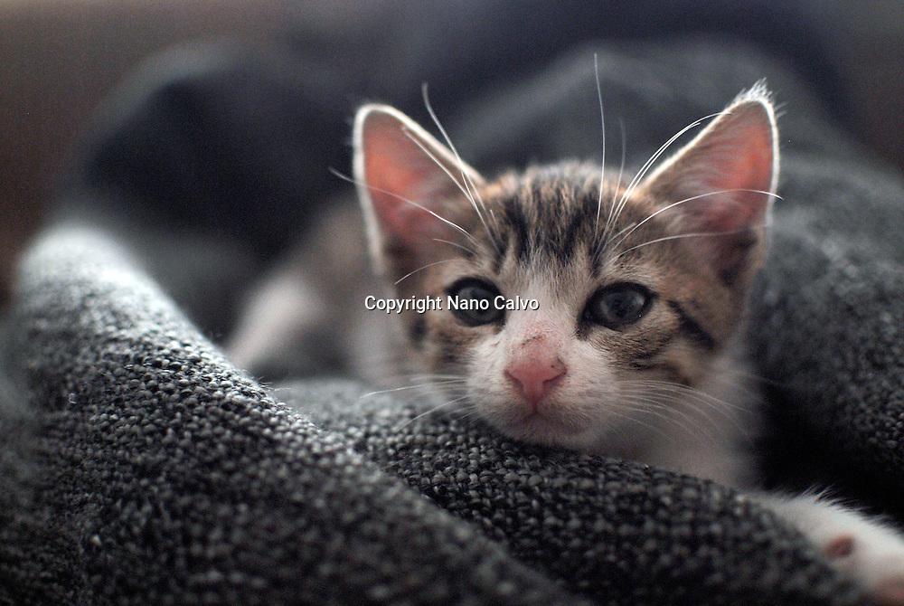 Cute few weeks old kitten