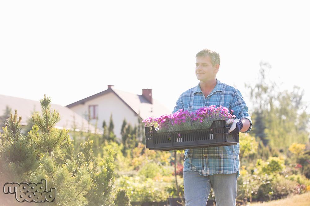 Gardener walking while carrying crate of flower pots in garden