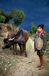 NEPAL POKHARA APR995 - A Nepalese boy brings home his family's bullocks before a hailstorm.<br /> <br /> jre/Photo by Jiri Rezac<br /> <br /> © Jiri Rezac 1995<br /> <br /> Tel: +44 (0) 7050 110 417<br /> Email: info@jirirezac.com<br /> Web: www.jirirezac.com
