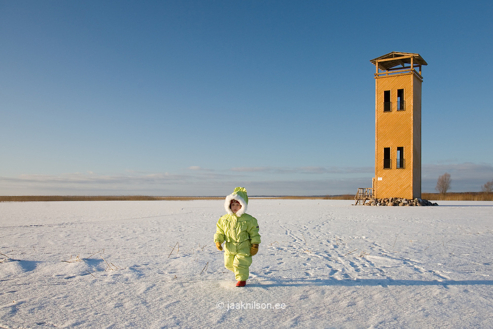 Kid Walking Over Frozen Lake Võrtsjärv by Bird Watching Tower, Viljandi County, Estonia