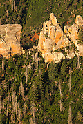 Trees hang onto the steep slopes of the North Rim of the Grand Canyon.