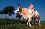 DEU, Deutschland: Hausrind (Bos taurus), Bauerstochter Marlene auf ihrem Rennochsen Falko, Falko ist ein Ochse von 24 Zentnern und nimmt an Ochsenrennen teil, Marlene trainiert und reitet ihn, Rasse: Fleckvieh, Bayern, Süddeutschland | DEU, Germany: Domestic cattle (Bos taurus), farmer's daughter ..Marlene sitting on race ox Falko, Falko is a ox of 24 centner and taking part in oxen races, Marlene coaching and riding it, race: Simmental Cattle, Bavaria, Southern Germany |