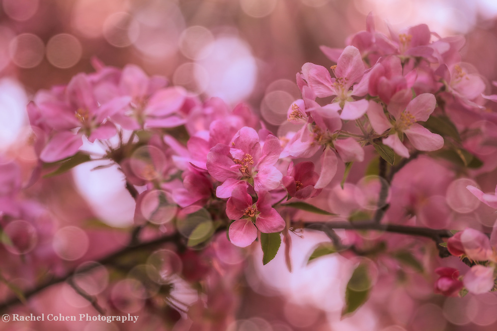 &quot;Dance of the Fairies 2&quot;<br />