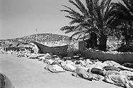 Earthquake in Agadir in Morocco in 1960. The massive  burial took place<br /> right away due to religion and extreme heat.<br /> <br /> <br /> Tremblement de terre &agrave; Agadir au Maroc en 1960. L'enterrement massif a eu lieu<br /> tout de suite en raison  de la chaleur extr&ecirc;me et en respect des traditions religieuses.