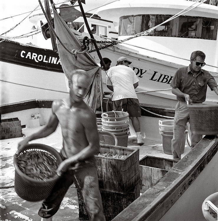 The crew of the Lady Caroline unload the days catch at the Wando Seafood docks on Shem Creek in Mount Pleasant, South Carolina.