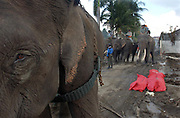 Banda Aceh, Indonesia<br />The tsunami on December 26 2004 devastated Banda Aceh and the west coast of Sumatra. In the tsunami wreckage the Indonesian Forestry Department uses elephants to search through debris for salvageable items.