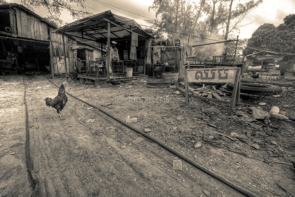 Chicken walks through fishing village Sihanoukville, Cambodia