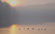 Pocono Mountains, Promised Land State Park, Pike Co., PA, sunrise, lake fog and mist
