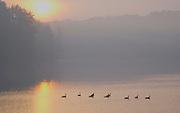 Pocono Mountains, Promised Land State Park, Pike Co., PA, sunrise, lake fog and mist