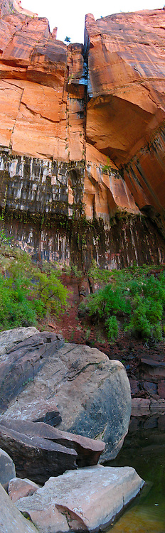Seeping water stains the red rock wall towering above the Upper Emerald Pool in Zion National Park.