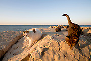 My cat-friends on the beach