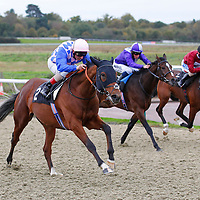Lingfield 7th November